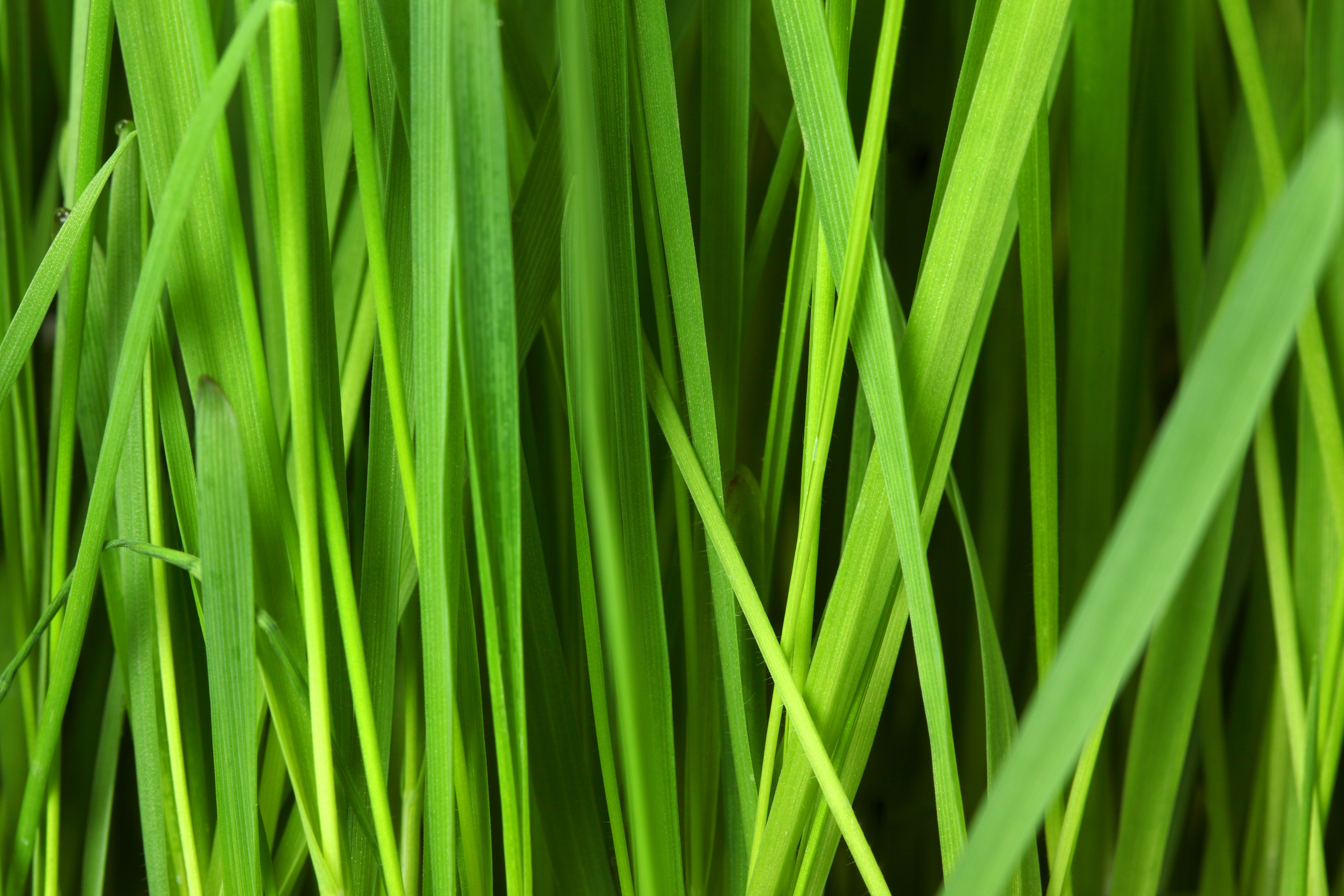 wallpapers/grass.jpg